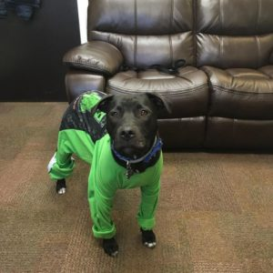 Image of Chester the dog wearing green outfit